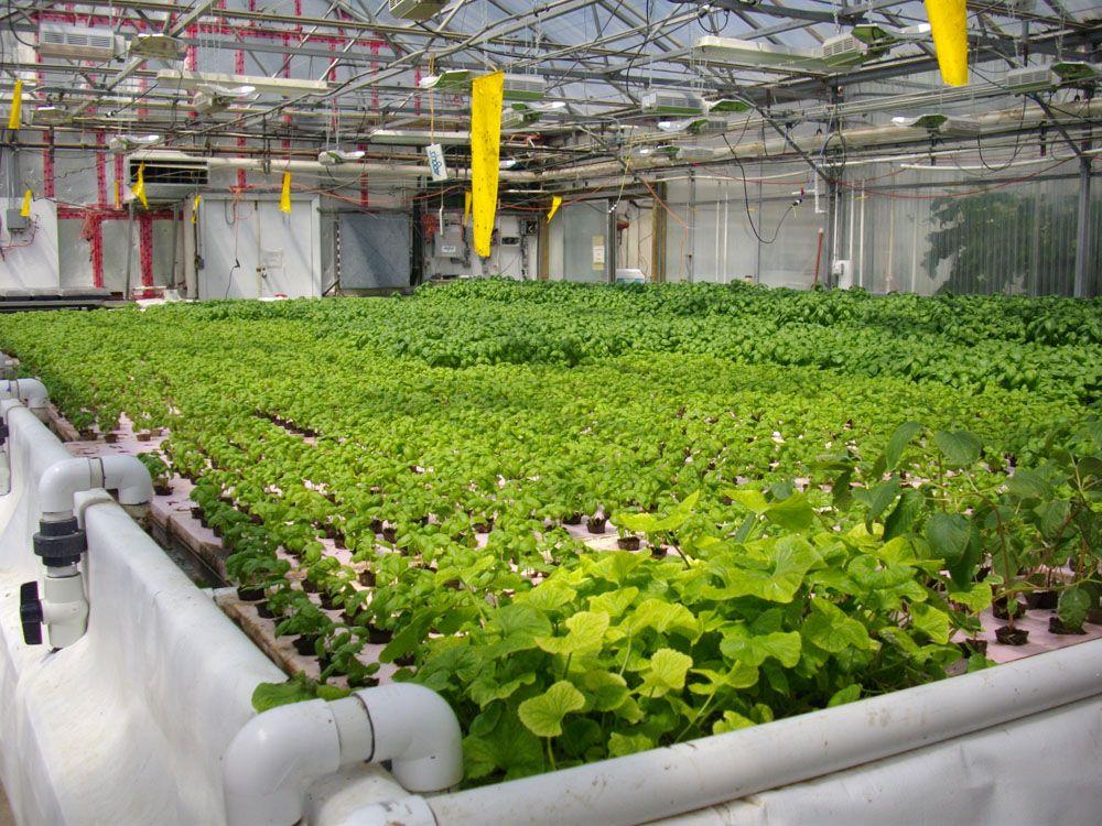 ecoindustries-hydroponics.jpg